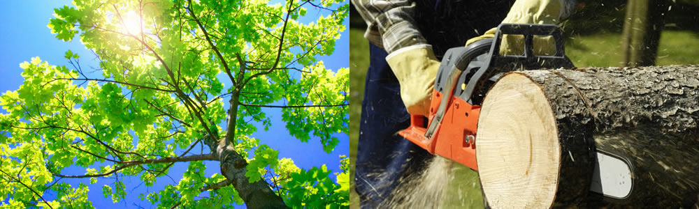 Tree Services North Palm Beach